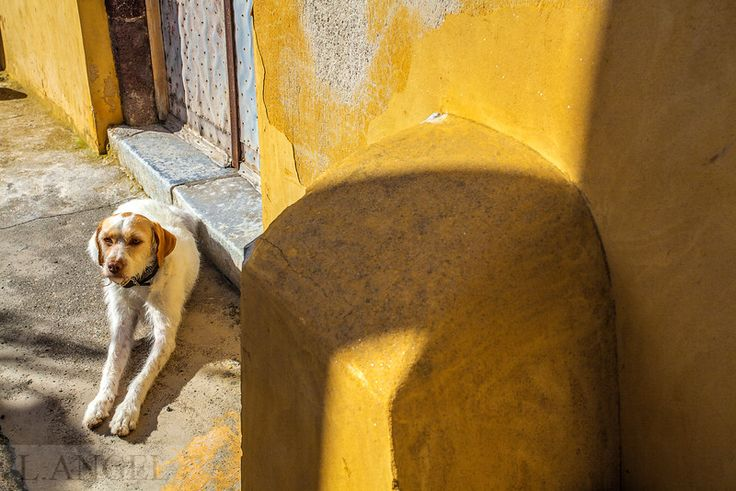 Santorini; Greece; dog; yellow,sunset