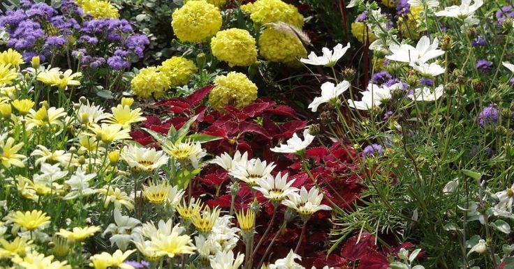 Ein schöner Garten muss nicht teuer sein. Mit guten Gestaltungsideen und ein wenig Geduld sind auch preiswerte Lösungen möglich.