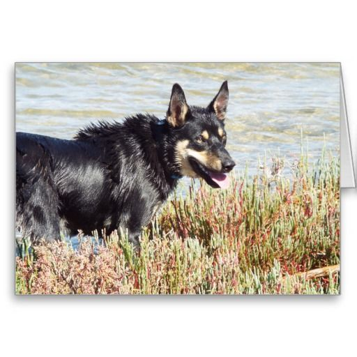 Swamp Dog Greeting Card