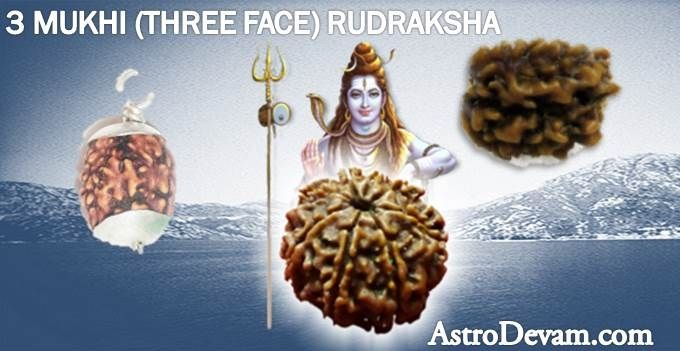 3 Faced Rudraksha bead is useful for those who are suffering from mental instability, depression, stress and anxiety. This powerful Rudraksha bead has an amazing spiritual powers. 3 Mukhi sacred Rudrakshas offered by AstroDevam.com are accurately checked by an expert with the use of scientific instruments.