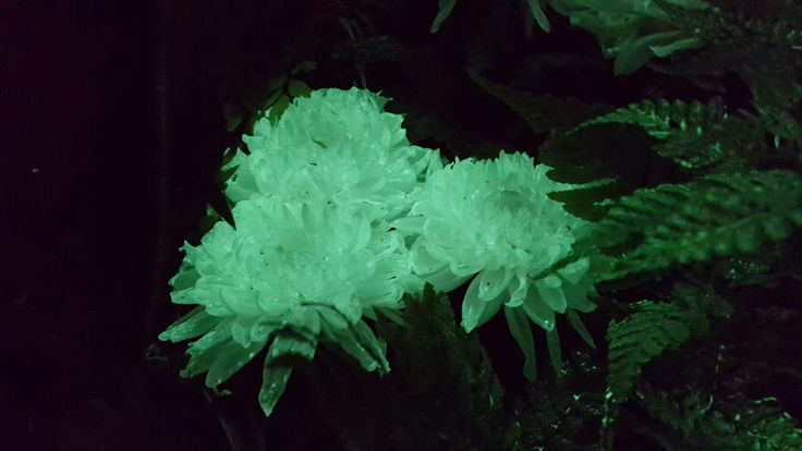 flAVATAR Chrisantemum - #glowinthedark
