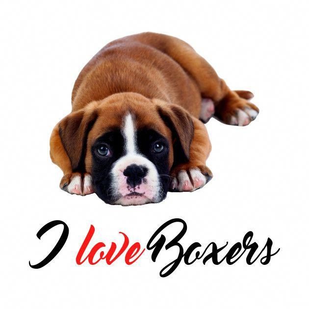 Boxer Energetic And Funny Boxer Dogs Boxer Puppies Boxer Dogs Funny