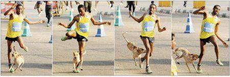 Эфиопского марафонца на дистанции покусала собака
