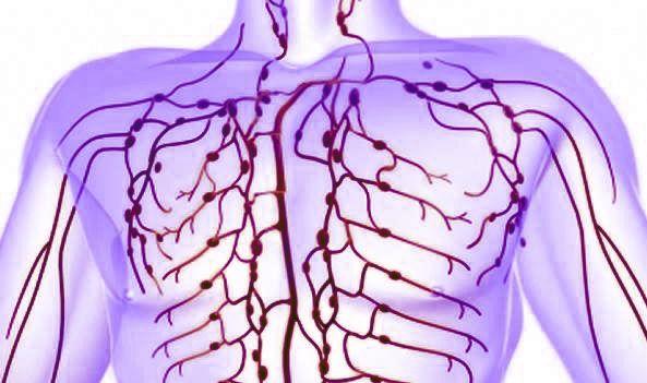 La linfa è quel tessuto fluido che, come il sangue, consta di una parte liquida, il plasma, e di elementi cellulari. Questi sono globuli bianchi,