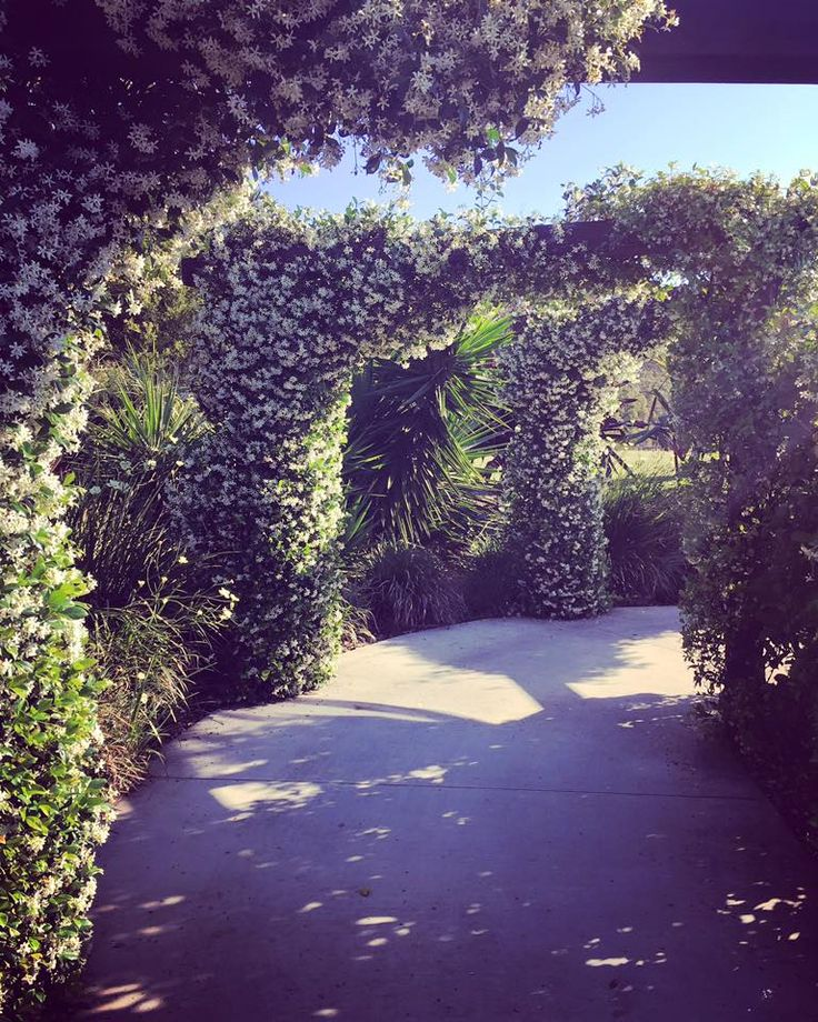 Our lush pavilion pathway! Imagine walking down this path to your ceremony.
