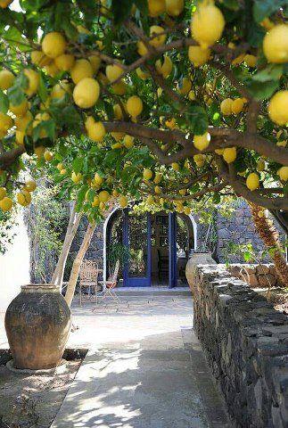 Memories of the Lemon Trees in Sorento, Italy & the Limonchello Liqueur