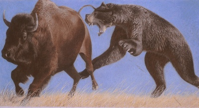 Short-faced bear, Arctodus simus, attacking a bison