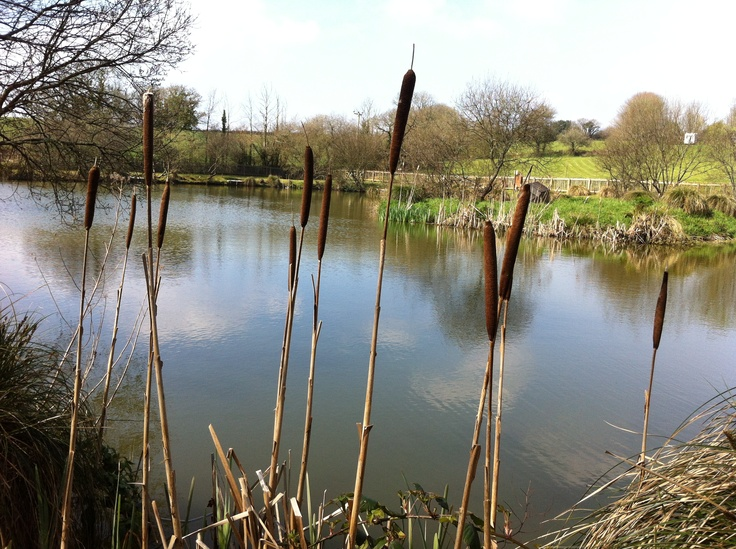 see the natural shrubs, plants and trees growing around the beautiful lakes at Meadow Lakes Holiday Park, Cornwall