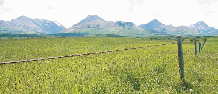 Alfalfa, grasses top choices to aid in carbon sequestration - The Western Producer