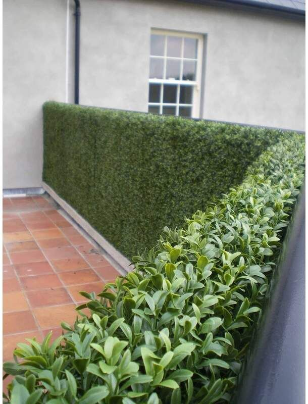 Gracie Oaks Scudder Artificial Boxwood Hedge Privacy Fence Screen Greenery Panels Garden Fence Panels Artificial Boxwood Hedges