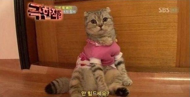 극한직업 고양이 | 유머 게시판 | 루리웹 모바일