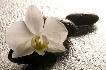 Bílá orchidej a kameny po mokrém povrchu s odleskem