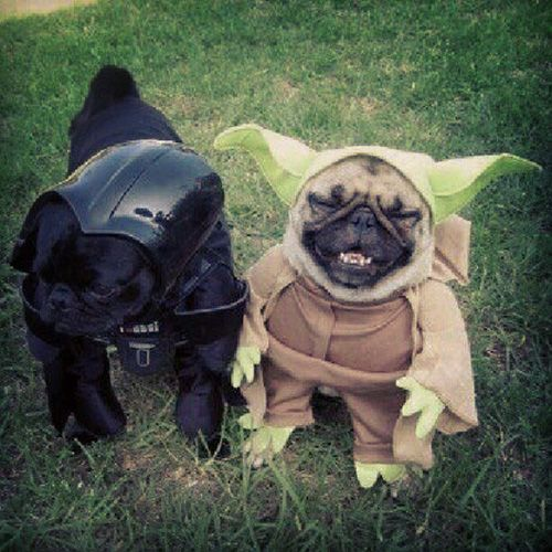 Pet Halloween Costumes: Star Wars dogs