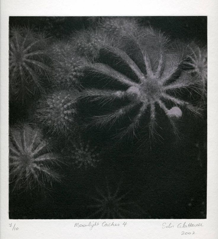 Silvi Glattauer. Moonlight Cactus Series..photogravure with Rolled Colour. Edition of 10. Plate size 20 x 20 cm