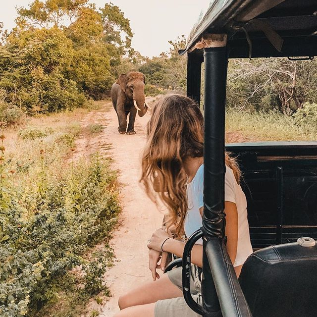 Dream.Come.True.⠀ ⠀ I set out with tempered expectations on our Safari in Sri Lanka. The only other safari I had done was Ranthambore in India and sadly I didn't get to see any tigers despite going on four drives. Luckily this trip was very different! Not only did we see two tusked elephants, a breeding herd of female elephants, and two up close leopards, but also the ultimate highlight, watching a live kill which lasted over 2 hours from the moment a leopard began stalking it's prey to…