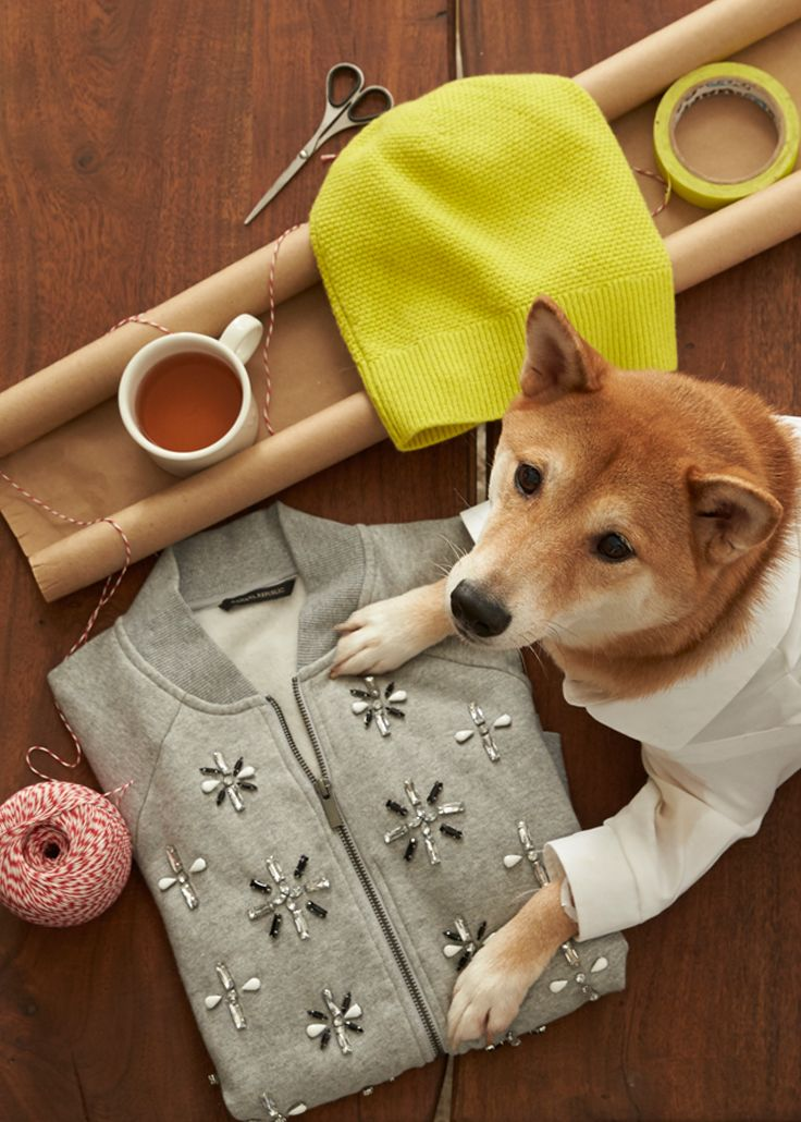 Wonderful Dog Gifts For Her Part - 8: Still Searching For The Perfect Gift For Her This Holiday Season? Menswear  Dog Is Here