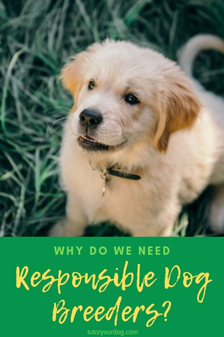 Why Do We Need Responsible Dog Breeders Dogs Dog Breeds