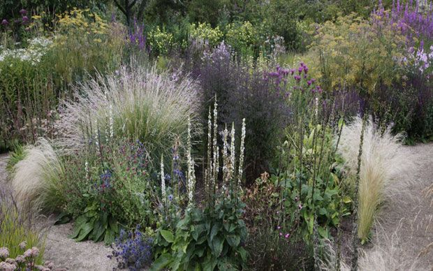 17 best images about prairie grass border ideas on for Grasses planting scheme
