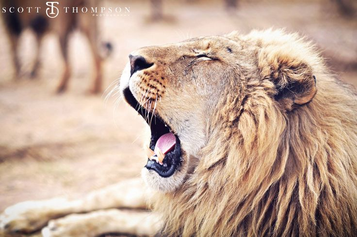 roaring with pride!