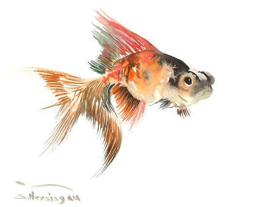 Les 20 meilleures id es de la cat gorie poissons d for Poisson rouge koi