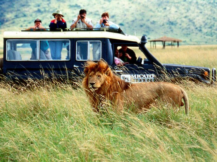 Africa for a safari!