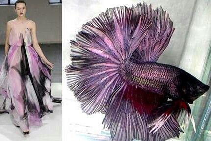 Purple and black fish dress