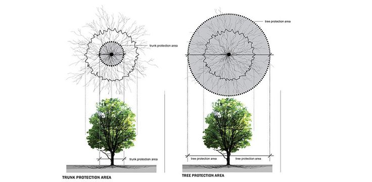 Counts Studio 100 Year Comprehensive Tree Strategy Tree and Trunk Protection Area Section and Plan Diagrams