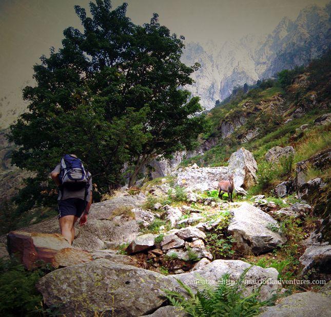 Escursione incontro con camosci e stambecchi - Excursia intalnire cu capre negrehttp://matrioskadventures.com/2013/07/13/escursione-incontro-con-camosci-stambecchi-excursia-intalnire-cu-capre-negre/