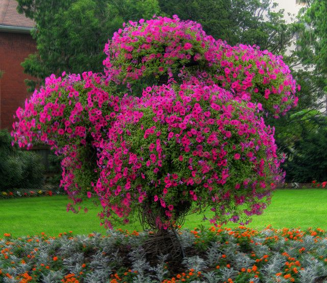 Several baskets filled with Petunias mounted on a man made sculpture make this look like a Petunia tree... amazing.