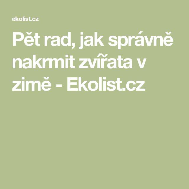 Pět rad, jak správně nakrmit zvířata v zimě - Ekolist.cz