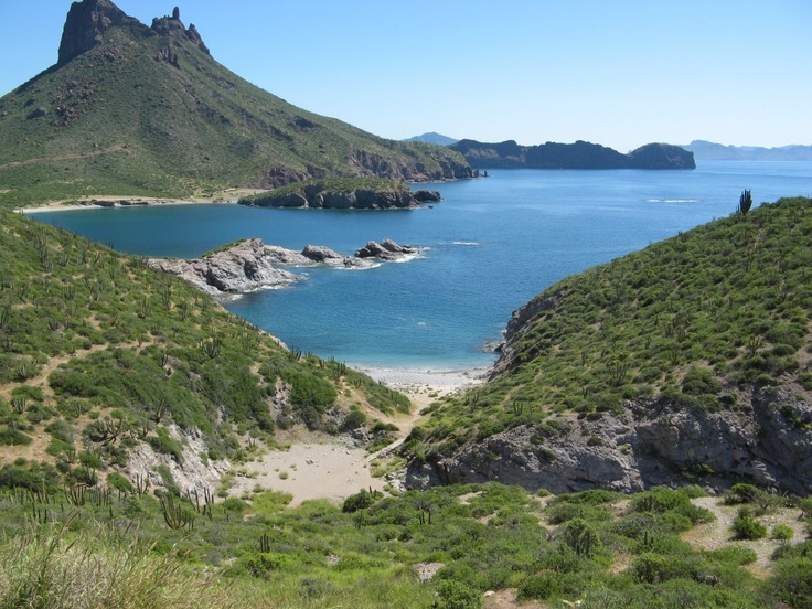 39 best images about san carlos sonora mexico on for San carlos mexico fishing