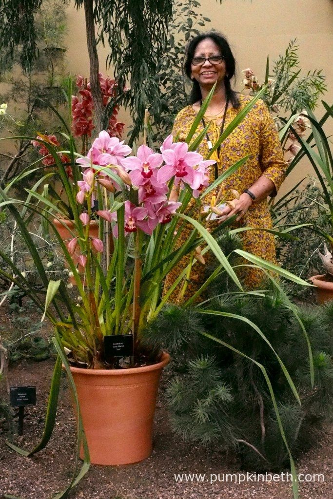 """Bala Kompalli, a wonderful horticulturist from the Orchid Unit at the Royal Botanic Gardens, Kew, is pictured here with Cymbidium 'Loch Maree' """"Jim"""", inside the Princess of Wales Conservatory at Kew."""