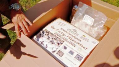 Pilze selber züchten, Quelle: WDR