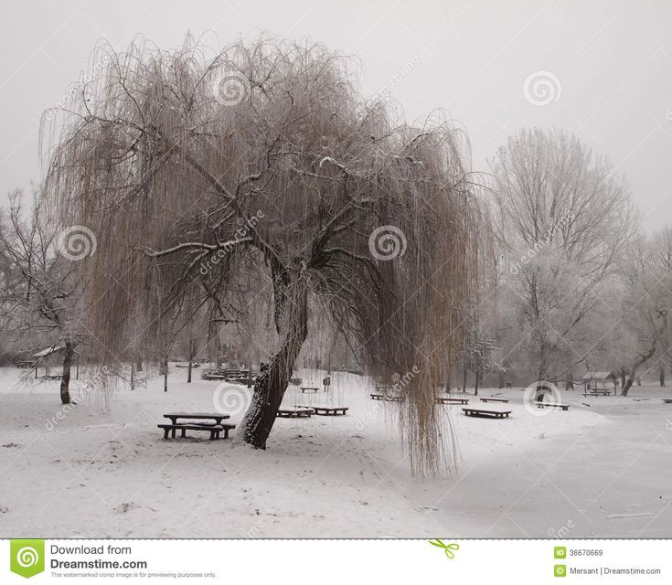 A park with trees in winter