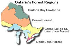 map outlining Ontario's forests regions Ministry of Natural Resources
