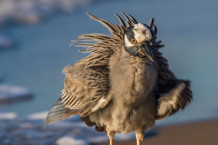 1000+ ideas about Feather Photography on Pinterest ... Ruffled Feathers