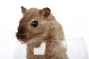 Surefire Ways to Get Rid of Mice Totally grossed out that I need this...