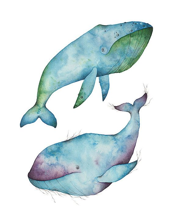 Two Whales illustration print by amidthetrees on Etsy, $16.00