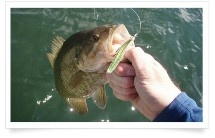 """Fishing - The best Bass fishing spot ever. Bring your rod, tackle and bait. Please note that we operate on a """"catch & release"""" system. Other species in the river are: Carp, Bluegill, Catfish etc."""