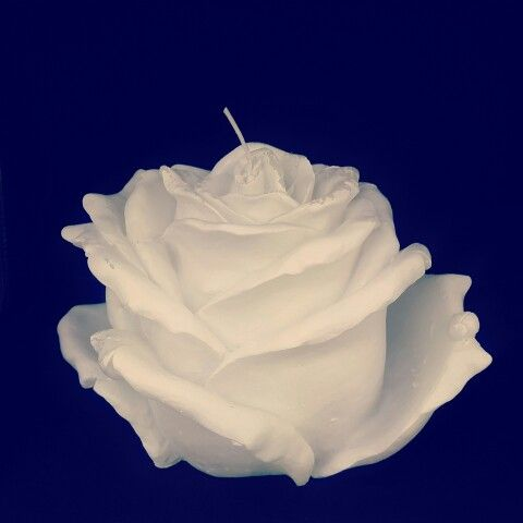 Giant White Rose candle