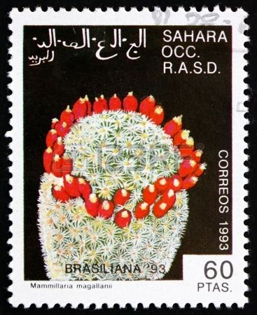 Mammillaria Magallanni Cactus, World Stamp Exhibition Brasiliana 1993,stamp printed in Sahrawi Arab Democratic Republic,Sahara, circa 1993