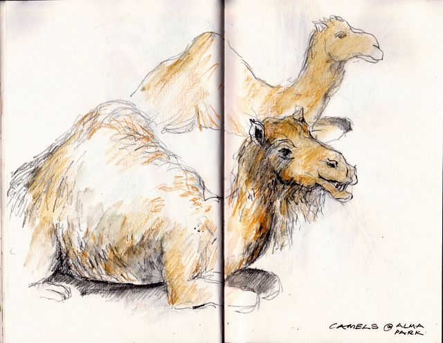 Camels at Alma Park Zoo yesterday. Graphite and watercolour pencil S&B Alpha sketchbook. © 2013 Carol Lee Beckx