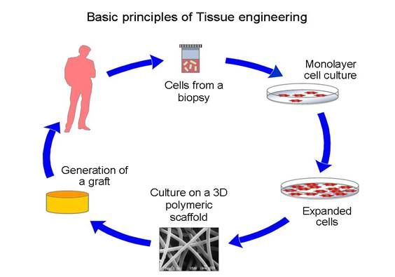 Biometrology in Tissue Engineering: Thoughts and Concepts