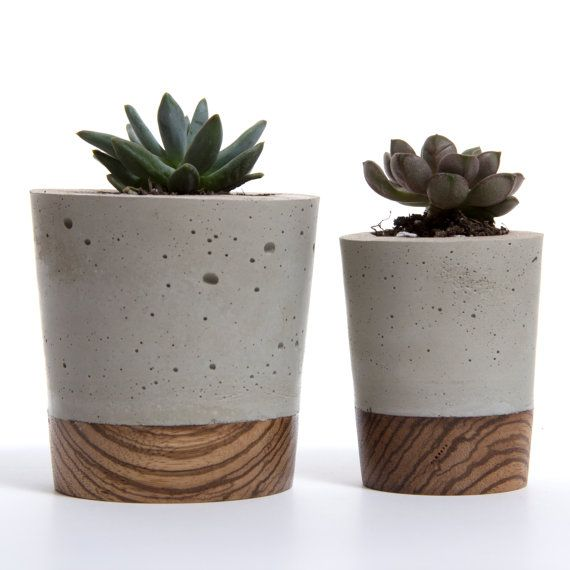 Mini Concrete Planter – Zebra Wood Base by Wasatch Creative