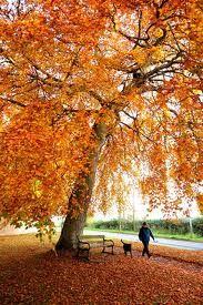Autumn Breaks in the UK 2013