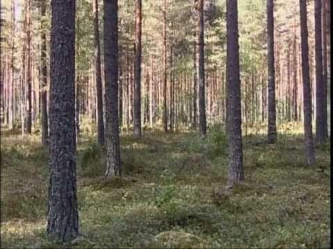 Metsä - Suomalainen sielunmaisema - YouTube