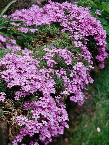 20 perennes que adornarán tu jardín