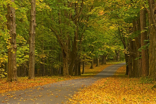 Tree Lined by Matt Champlin, via Flickr: Photos, Country Roads, Trees, Photo Tags, Places, Interesting Photo, Matte Champlin