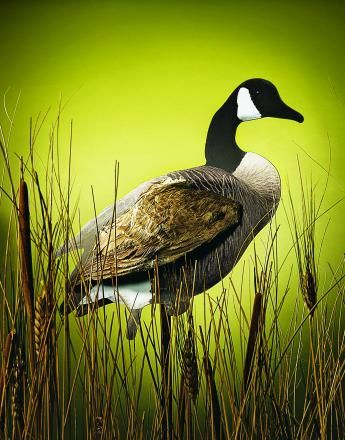 1000 Images About Goose Obsession On Pinterest Snow