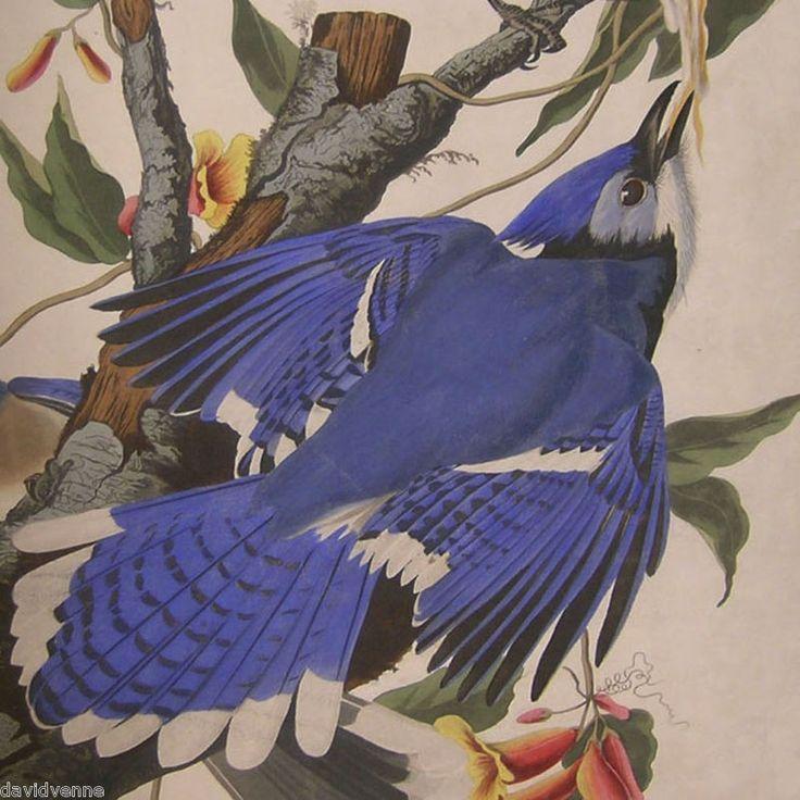 John J Audubon 13 x 13 Blue Jay Bird Needlepoint Canvas 14 or 18 count